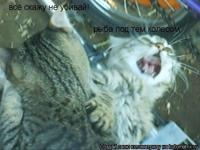 Котоматрица: рыба под тем колесом всё скажу не убивай!