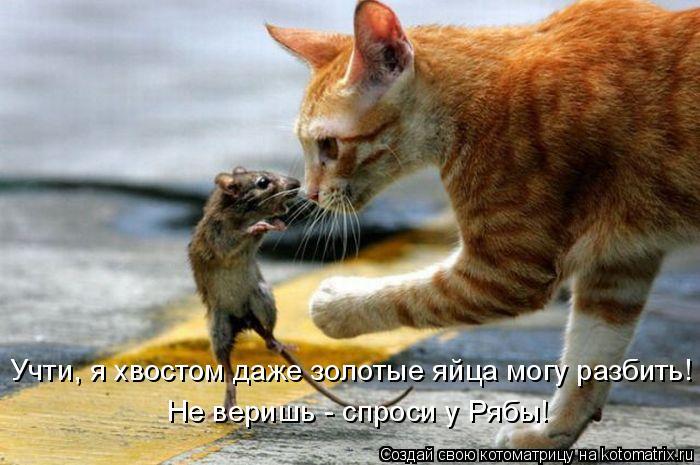 Котоматрица: Учти, я хвостом даже золотые яйца могу разбить! Не веришь - спроси у Рябы!
