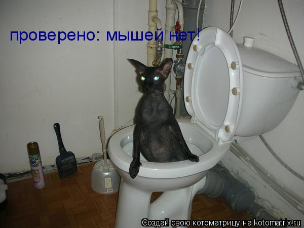 Котоматрица: проверено: мышей нет!