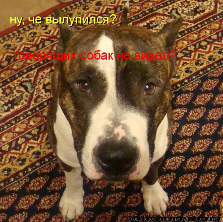 Котоматрица: ну, че вылупился?  говорящих собак не видел?