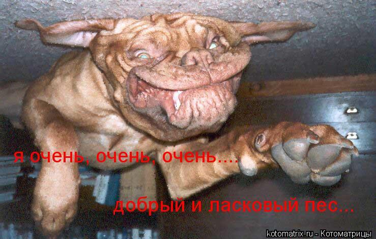 Котоматрица: я очень, очень, очень.... добрый и ласковый пес...