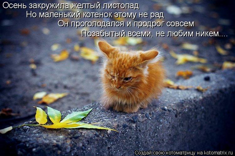 Котоматрица: Осень закружила желтый листопад Но маленький котенок этому не рад Он проголодался и продрог совсем Позабытый всеми, не любим никем....