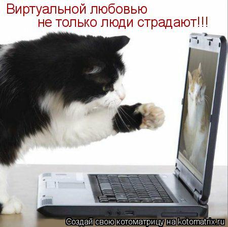 Котоматрица: Виртуальной любовью  не только люди страдают!!!
