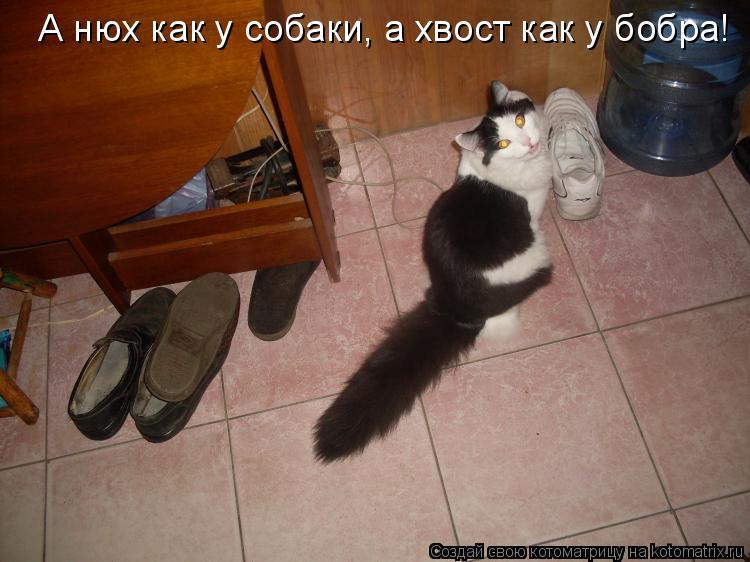 Котоматрица: А нюх как у собаки, а хвост как у бобра!
