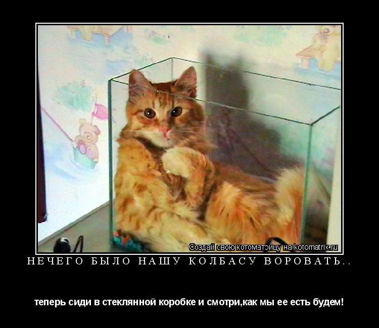 Котоматрица: нечего было нашу колбасу воровать.. теперь сиди в стеклянной коробке и смотри,как мы ее есть будем!