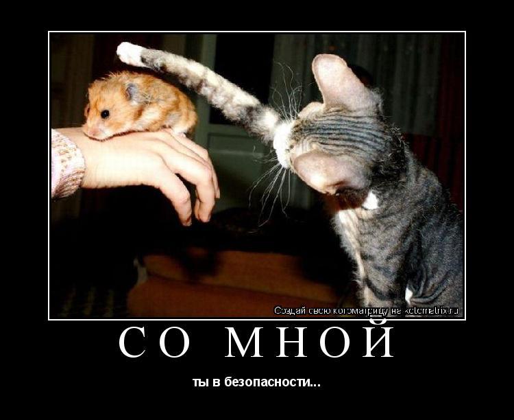 Котоматрица: Со мной ты в безопасности...