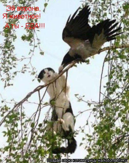 Котоматрица: Эй ворона, Я животное! А ты - ЕДА!!!