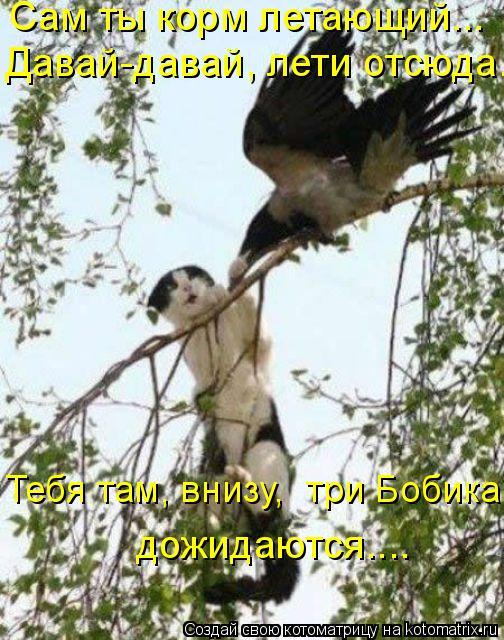 Котоматрица: Сам ты корм летающий….. Давай-давай, лети отсюда…  дожидаются…... Тебя там, внизу,  три Бобика