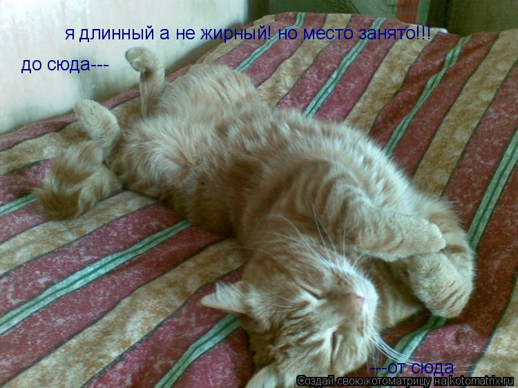 Котоматрица: я длинный а не жирный! но место занято!!! ---от сюда до сюда---