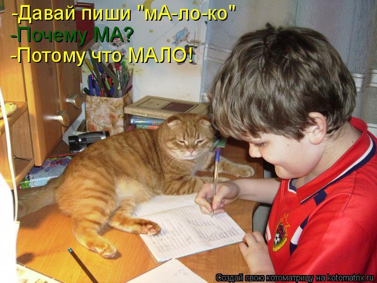 """Котоматрица: -Давай пиши """"мА-ло-ко"""" -Почему МА? -Потому что МАЛО!"""