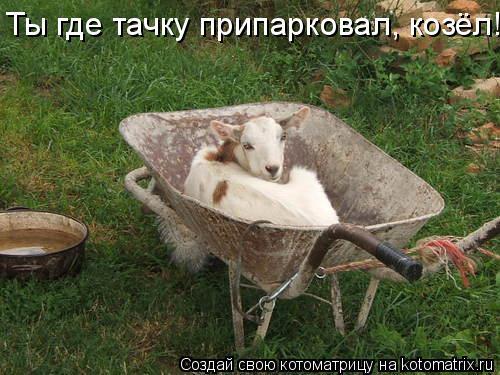 Котоматрица: Ты где тачку припарковал, козёл!