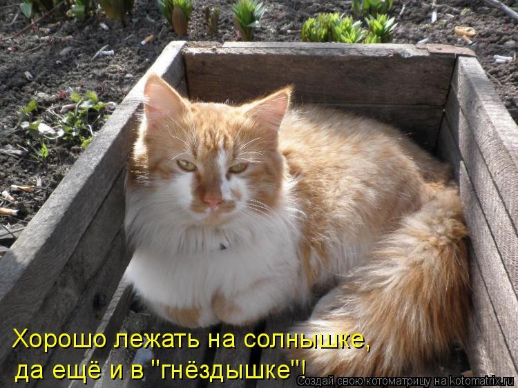 """Котоматрица: Хорошо лежать на солнышке, да ещё и в """"гнёздышке""""!"""