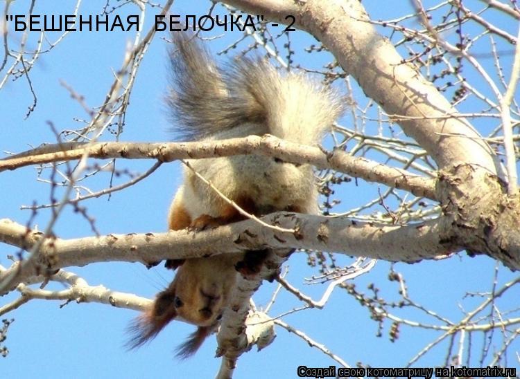 "Котоматрица: ""БЕШЕННАЯ  БЕЛОЧКА"" - 2"