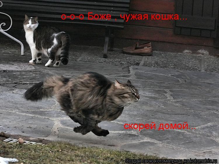 Котоматрица: скорей домой... о-о-о Боже , чужая кошка...