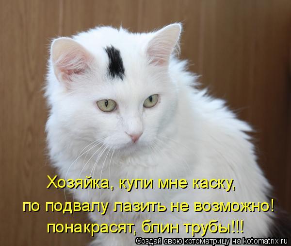 Котоматрица: Хозяйка, купи мне каску,  по подвалу лазить не возможно! понакрасят, блин трубы!!!