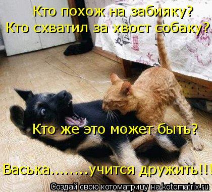 Котоматрица: Кто похож на забияку? Кто схватил за хвост собаку? Кто же это может быть? Васька........учится дружить!!!