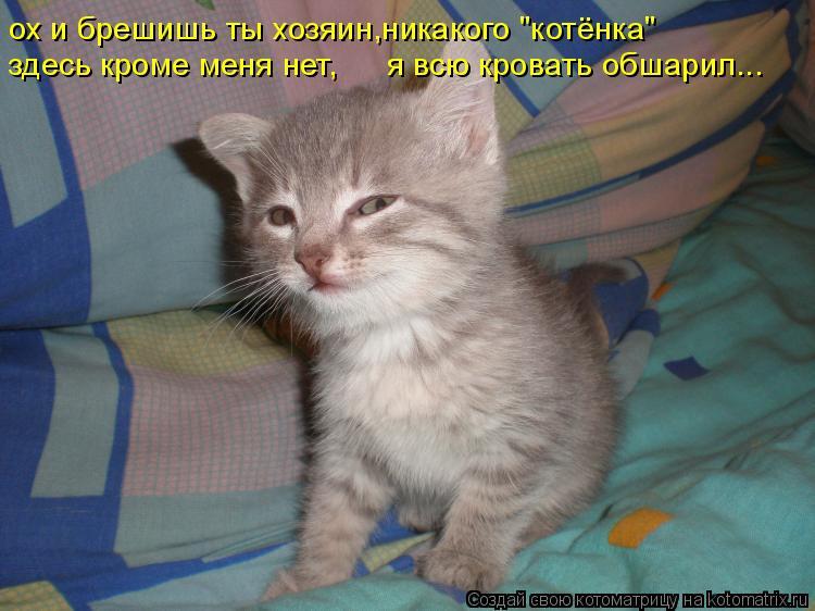 """Котоматрица: ох и брешишь ты хозяин,никакого """"котёнка""""  здесь кроме меня нет, я всю кровать обшарил..."""