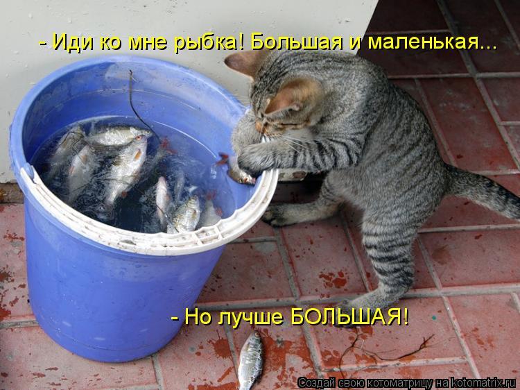 Котоматрица: - Иди ко мне рыбка! Большая и маленькая... - Но лучше БОЛЬШАЯ!