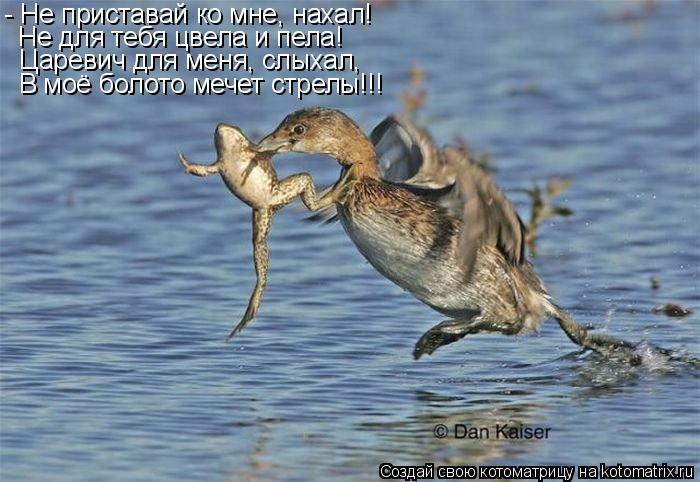 Котоматрица: - Не приставай ко мне, нахал! Не для тебя цвела и пела! Царевич для меня, слыхал, В моё болото мечет стрелы!!!