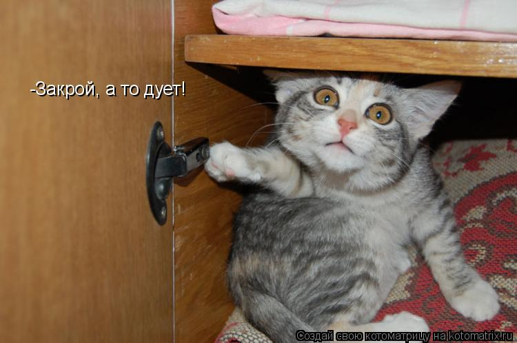Котоматрица: -Закрой, а то дует!