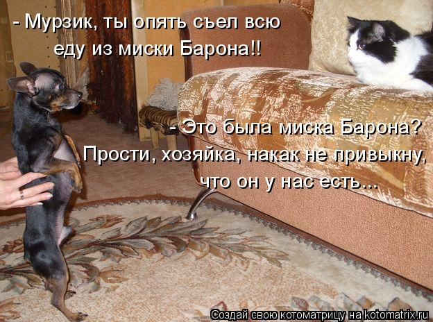 Котоматрица: - Мурзик, ты опять съел всю  еду из миски Барона!! что он у нас есть... Прости, хозяйка, накак не привыкну,  - Это была миска Барона?