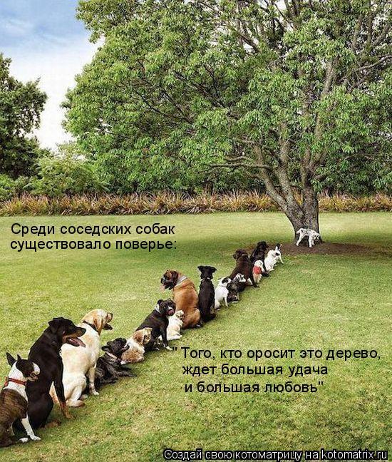 """Котоматрица: Среди соседских собак существовало поверье: """" Того, кто оросит это дерево, ждет большая удача и большая любовь"""""""