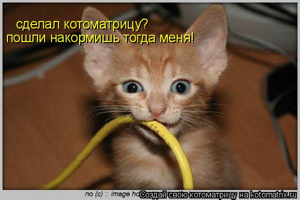Котоматрица: сделал котоматрицу? пошли накормишь тогда меня!