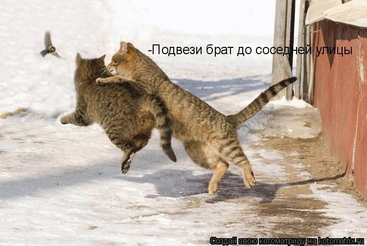 Котоматрица: -Подвези брат до соседней улицы