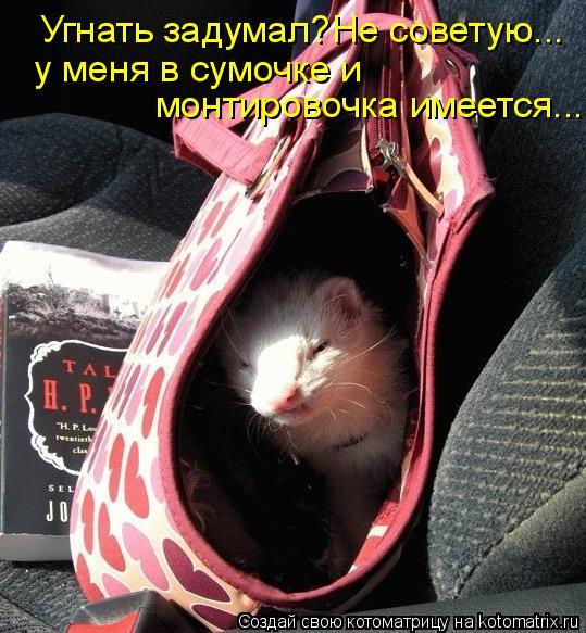 Котоматрица: Угнать задумал?Не советую... у меня в сумочке и  монтировочка имеется...