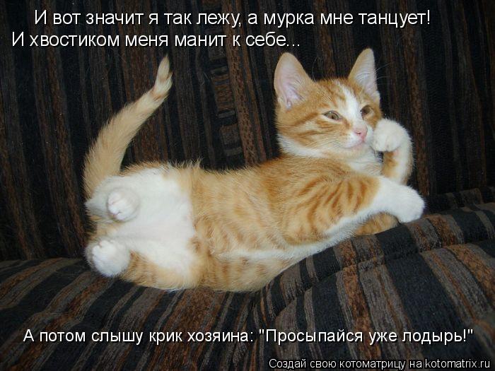 """Котоматрица: И вот значит я так лежу, а мурка мне танцует! И хвостиком меня манит к себе...  А потом слышу крик хозяина: """"Просыпайся уже лодырь!"""""""