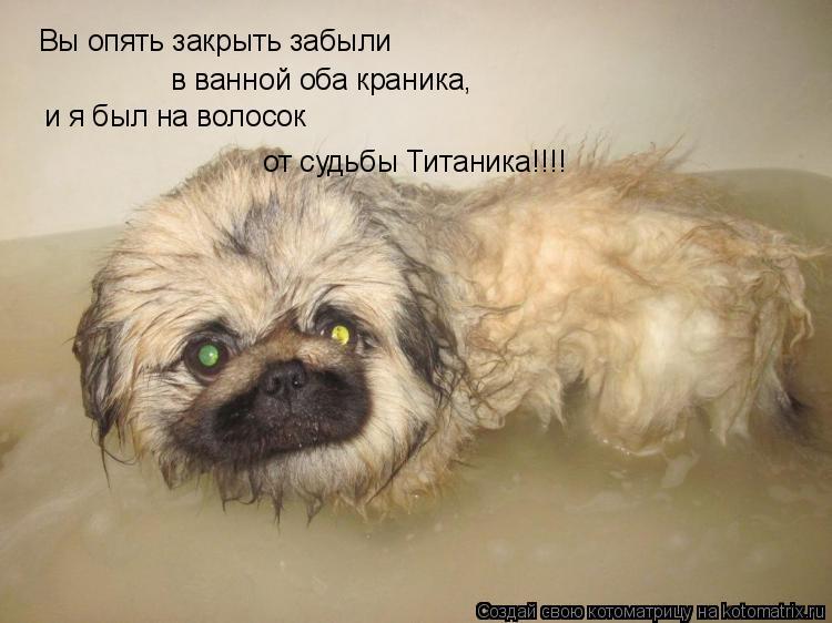 Котоматрица: в ванной оба краника, Вы опять закрыть забыли и я был на волосок от судьбы Титаника!!!!