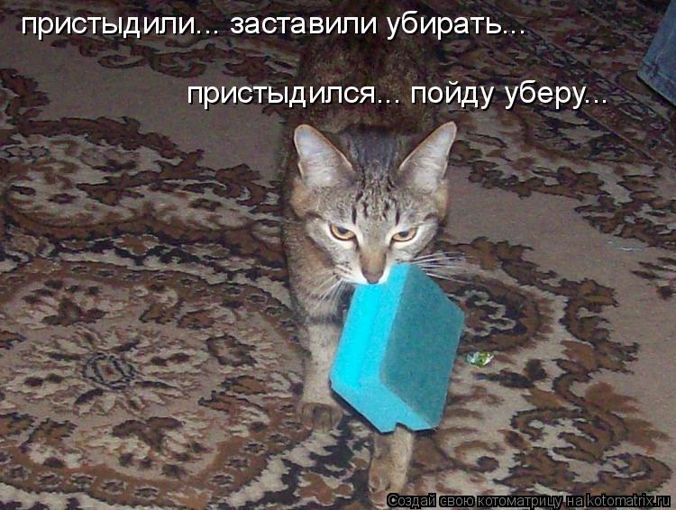 Котоматрица: пристыдили... заставили убирать... пристыдился... пойду уберу...