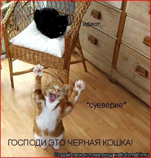 Котоматрица: *суеверие* ГОСПОДИ ЭТО ЧЕРНАЯ КОШКА! идиот...