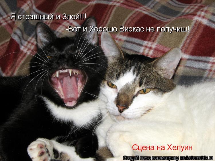 Котоматрица: -Я страшный и Злой!!! -Вот и Хорошо Вискас не получиш! Сцена на Хелуин