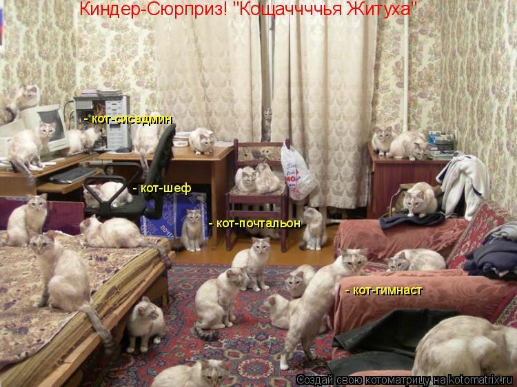 """Котоматрица: Киндер-Сюрприз! """"Кощаччччья Житуха""""  - кот-почтальон  - кот-гимнаст  - кот-шеф  - кот-сисадмин"""