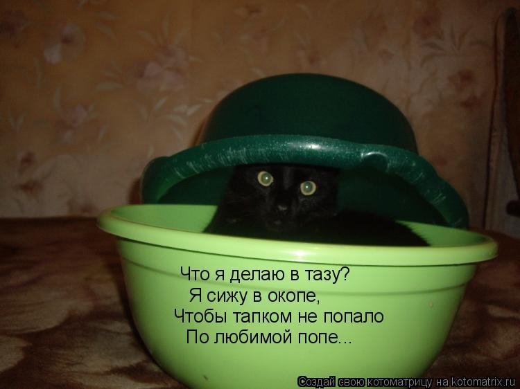 Котоматрица: Что я делаю в тазу? Я сижу в окопе, Чтобы тапком не попало По любимой попе...