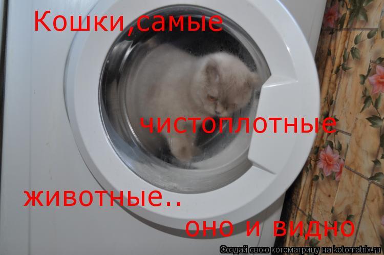 Котоматрица: Кошки,самые  чистоплотные животные.. животные.. оно и видно