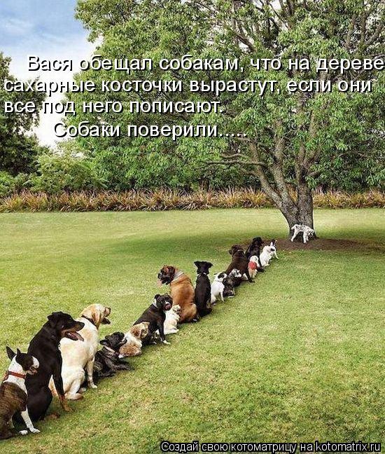 Котоматрица: Вася обещал собакам, что на дереве сахарные косточки вырастут, если они  все под него пописают.  Собаки поверили.....