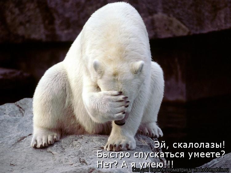 Котоматрица: Эй, скалолазы! Быстро спускаться умеете? Нет? А я умею!!!