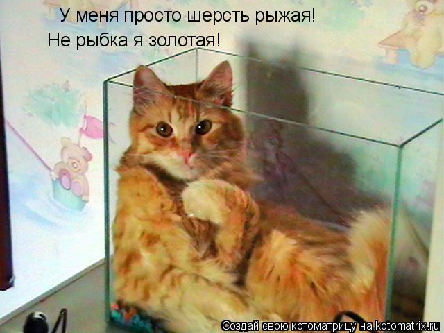 Котоматрица: У меня просто шерсть рыжая!  Не рыбка я золотая!