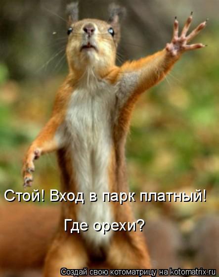 Котоматрица: Стой! Вход в парк платный! Где орехи?