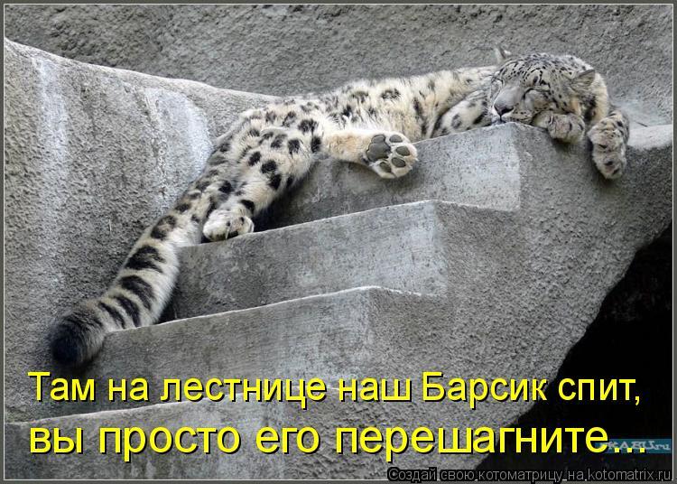 Котоматрица: Там на лестнице наш Барсик спит,  вы просто его перешагните...