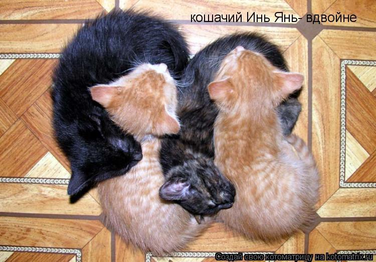 Котоматрица: кошачий Инь Янь- вдвойне