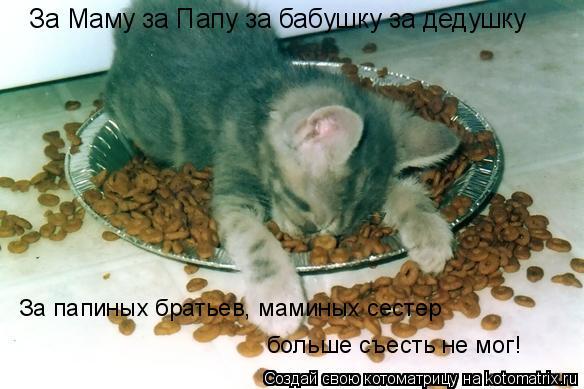 Котоматрица: За Маму за Папу за бабушку за дедушку За папиных братьев, маминых сестер больше съесть не мог!