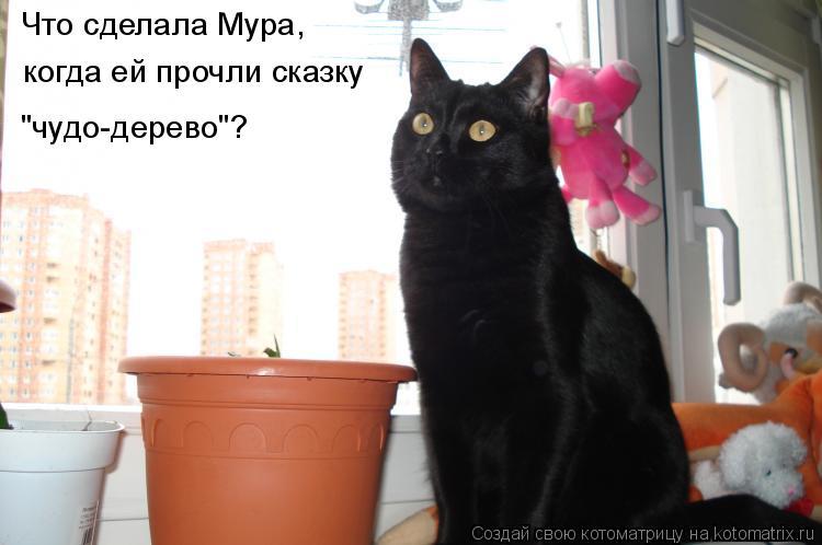 """Котоматрица: Что сделала Мура,  когда ей прочли сказку  """"чудо-дерево""""?"""