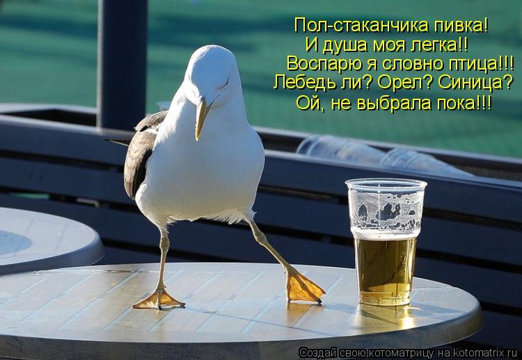 Котоматрица: Пол-стаканчика пивка! И душа моя легка!! Воспарю я словно птица!!! Лебедь ли? Орел? Синица? Ой, не выбрала пока!!!