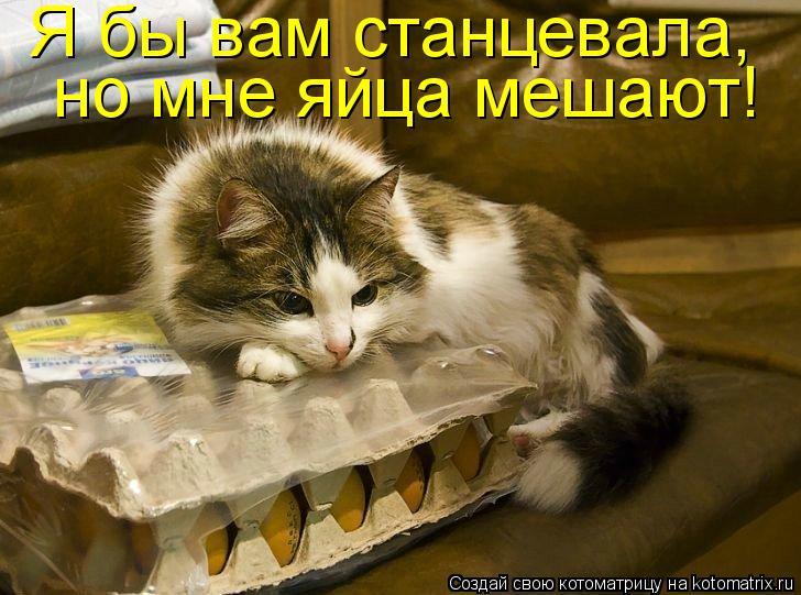 Котоматрица: Я бы вам станцевала,  но мне яйца мешают!
