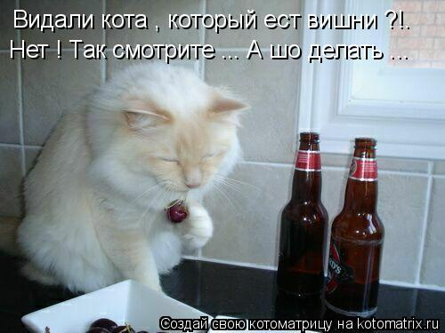 Котоматрица: Видали кота , который ест вишни ?!. Нет ! Так смотрите ... А шо делать ...