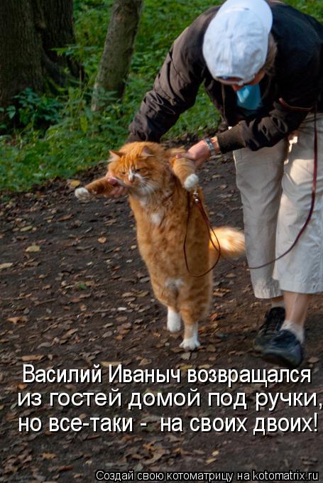 Котоматрица: Василий Иваныч возвращался  из гостей домой под ручки,  но все-таки -  на своих двоих!