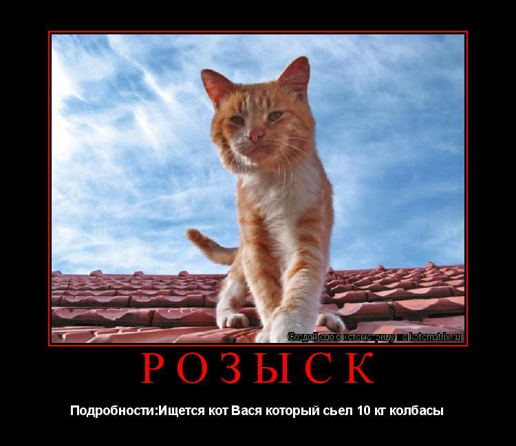 Котоматрица: Розыск Подробности:Ищется кот Вася который сьел 10 кг колбасы